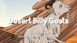 Desert Billy Goats Movie